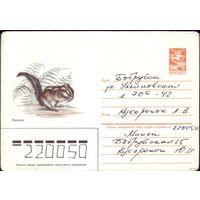 1985 год ХМК А.Исаков Бурундук