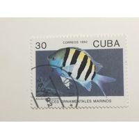 Куба 1992. Рыбы