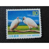 Япония. Птицы.