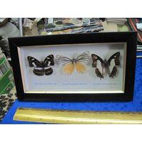 Панно-плакетка с тремя бабочками, торги!