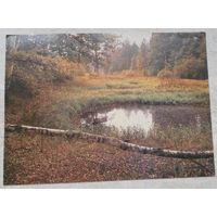 Осень. Фото Гиппенрейтера. 1986г.