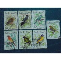 Малави. Птицы