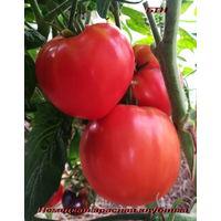 Семена томата Красная немецкая клубника