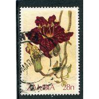 Замбия. Флора. Кигелия. (колбасное дерево)