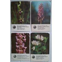 Календарики.цветы