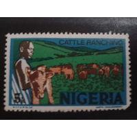 Нигерия 1973 стадо