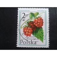 Польша 1977 малина
