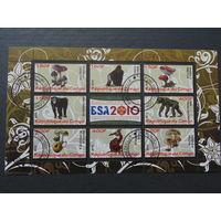 Конго 2010г. Грибы и обезьяны.