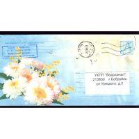 2004 год Хризантемы с мимозой
