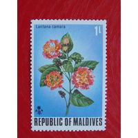 Мальдивы. Флора