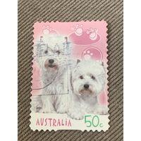 Австралия 2004. Породы собак. Марка из серии