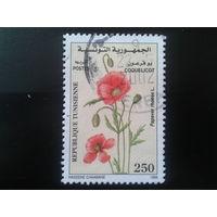 Тунис 1999 цветы
