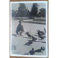 Подружился.  Фотооткрытка (фото - Терещенко Д.)  1957 г.