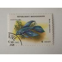 Мадагаскар 1994. Аквариумные рыбки.
