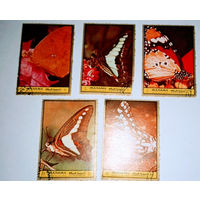 Манама, бабочки, фауна, распродажа