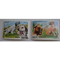Румыния.1990.породы собак