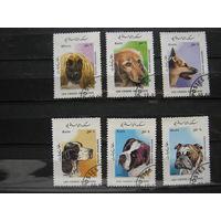 Марки - фауна собаки Афганистан 1986