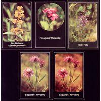 5 календариков Лекарственные растения
