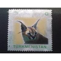 Туркменистан 2008 рысь