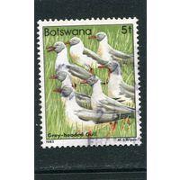 Ботсвана. Птицы 5т
