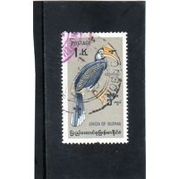 Бирма.Ми-186. Индийская птица-носорог  .1964.