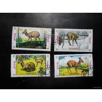 Монголия фауна