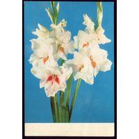 1973 год И.Кропивницкий Цветы