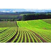 Курсовая - Экономическая эффективность использования сельскохозяйственных угодий и пути её повышения на примере СПК Струга