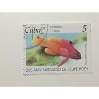 Куба 1999.  Рыбы