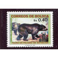 Боливия. Очковый медведь