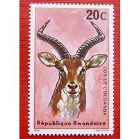 Руанда. Антилопа. Фауна. ( 1 марка ) 1975 года.