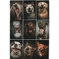 Календарики Болгарии-собаки ,9шт,2020