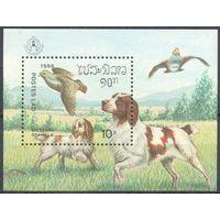 Лаос  фауна собака британский спаниель