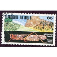Нигер. Пустынная саранча (африканская)