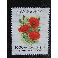 Иран. Флора.