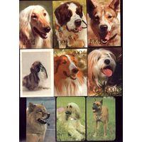 27 календариков Собаки