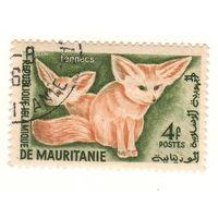 Мавритания. Лисы. 1 марка