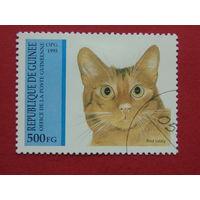 Гвинея 1995г. Коты.