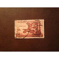 США 1956 г.Дикая индейка .