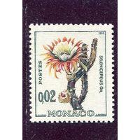 Монако. Кактус Селеницереус крупноцветковый