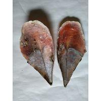 Ракушка моллюска Благородной Пинны,две раздельные створки.Длина 310мм.