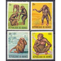 Гвинея  фауна тарзан обезьяны