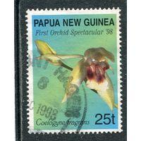 Папуа Новая-Гвинея. Орхидея Целогиня