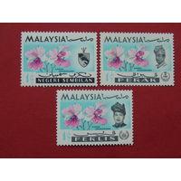 Малайзия. Цветы.