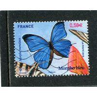 Франция. Бабочка. Морфо синяя