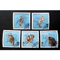 Мадагаскар 1990 г. Лемуры. Фауна, полная серия из 5 марок #0032-Ф2P6