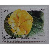 Куба.1997.цветок