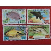 Бенин 1999г.Морская фауна.