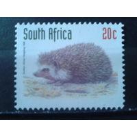 Южная Африка 1998 Ежик**