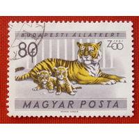 Венгрия. Тигры. ( 1 марка ) 1961 года.